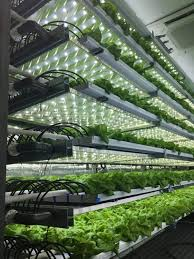 Take A 3D Tour Of A Vertical Farm Packed Inside A Shipping Container |  Indoor farming, Hydroponic gardening system, Hydroponics