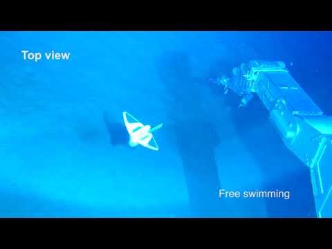 Free swimming of soft robot in deep sea at the depth of 3,224 m